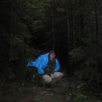 Вхід у ліс