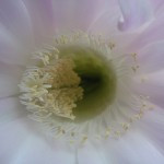 Всередині квітки