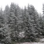 Зимова казка