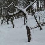 Дерево-хрест