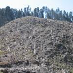 Ось що роблять у нас з лісом :(