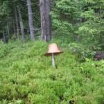 Найбільший гриб :)