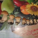 Ці гриби назбирав я