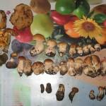 Все, що ми назбирали (верхній ряд білих грибів мій)