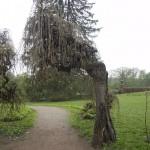 Дивні дерева