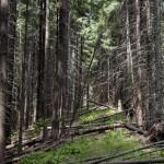 Загадковий ліс