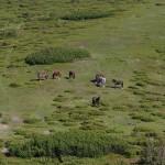 Коні (єдині великі живі істоти першого дня)