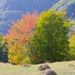 Сад одиноких дерев