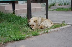 Собака Білка