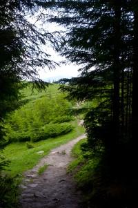 Початок лісу