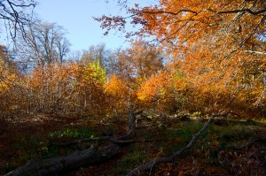 Осінній ліс