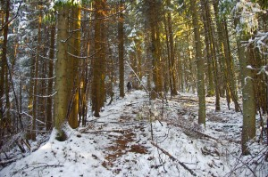 Весняний ліс
