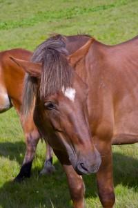 Кінь-емо